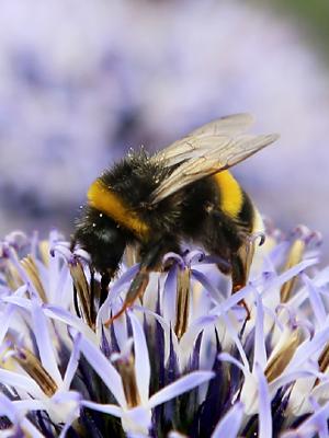 abeille-2h